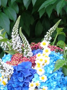 Hydrangeas, light and dark blue; red yarrow; white feverfew; white gooseneck loosestrife; and green raspberry foliage add up to a star-spangled bouquet.