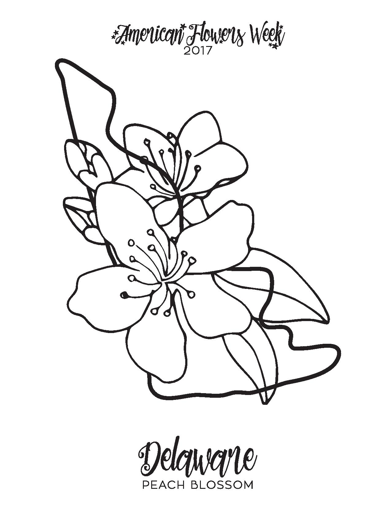 50 State Flowers Free Coloring