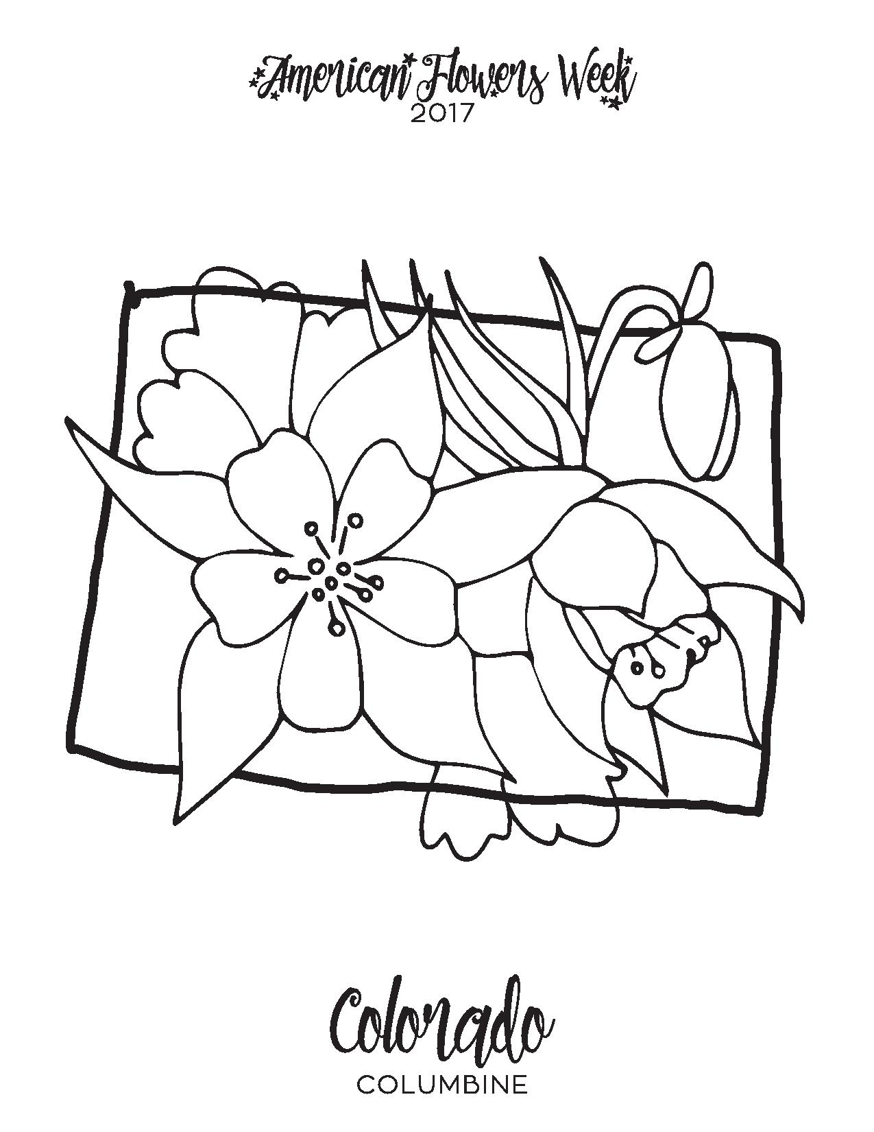 Columbine Flower Line Drawing : State flowers — free coloring pages american week