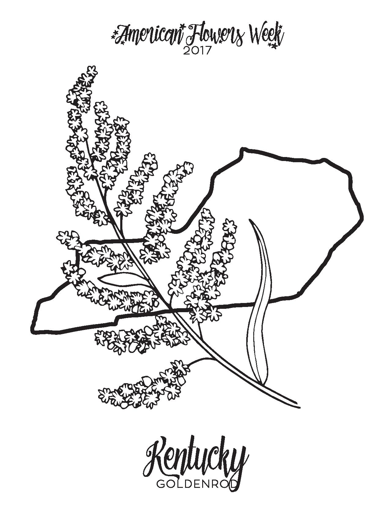 50 state flowers free coloring pages american flowers week for Kentucky state flower coloring page