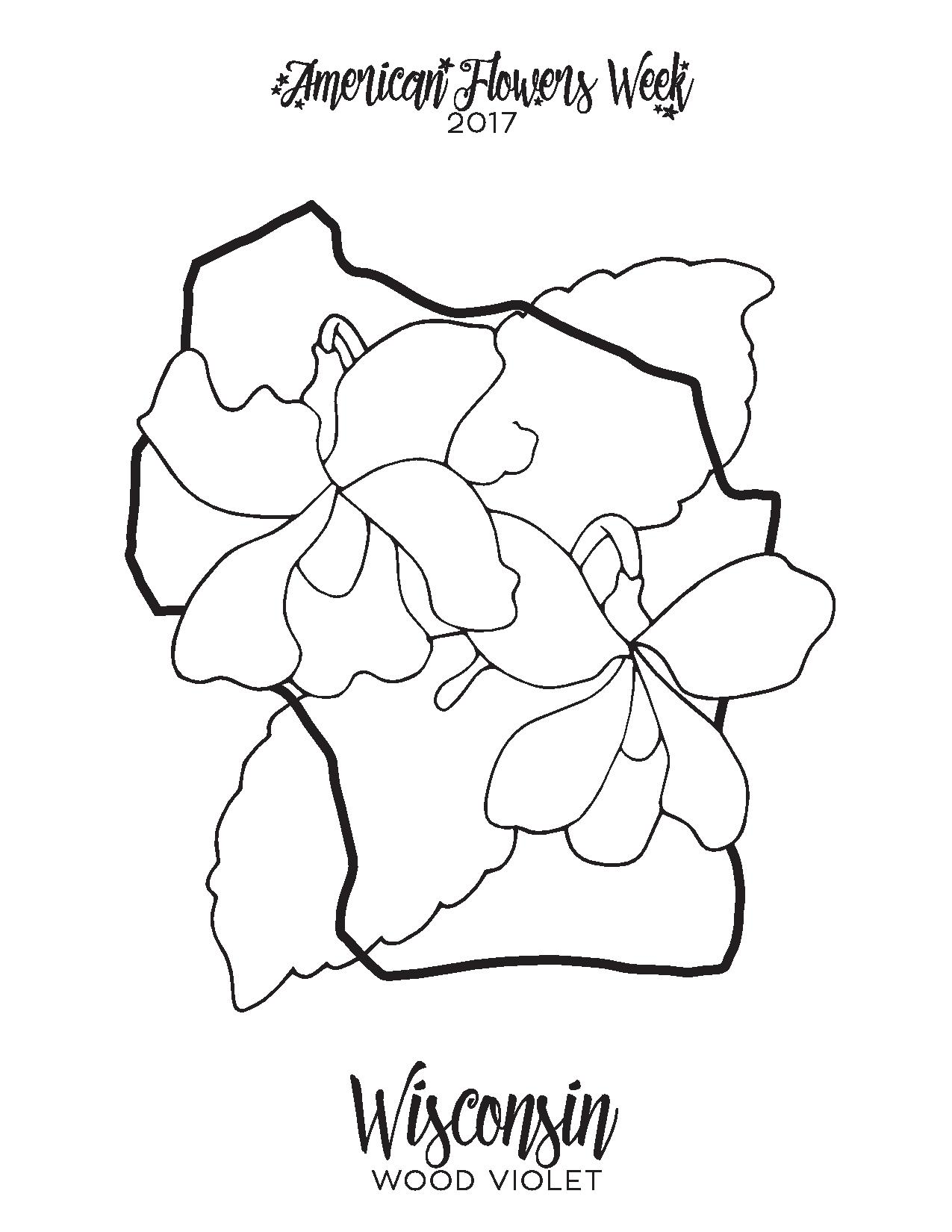 Coloring Pages Color Of Butterflies - 132.3KB