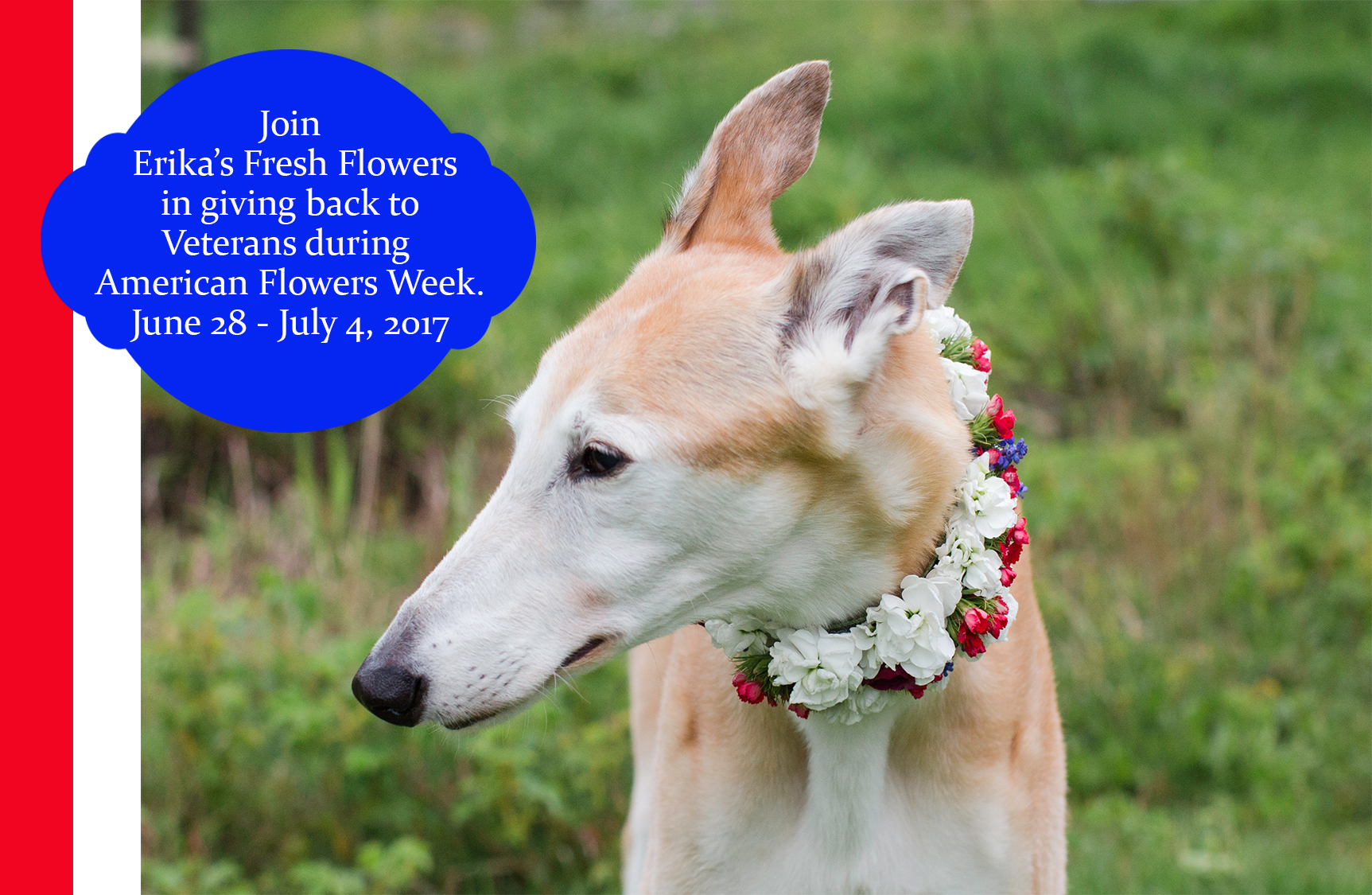 AMERICAN FLOWERS WEEK Promotion Idea