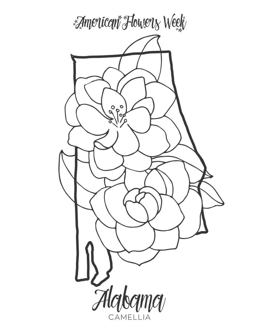 state flowers — free coloring pages  american flowers week