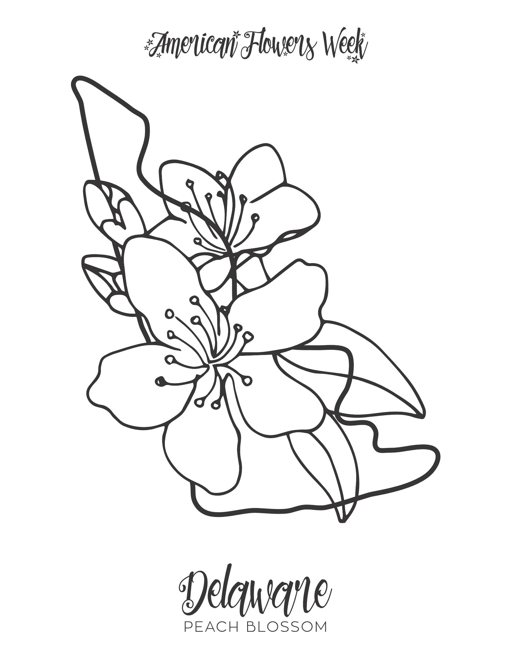 Delaware Peach Blossom PDF