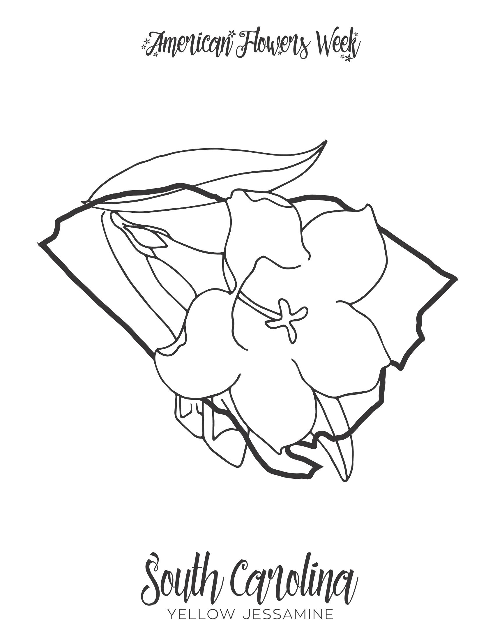 Tennessee Iris